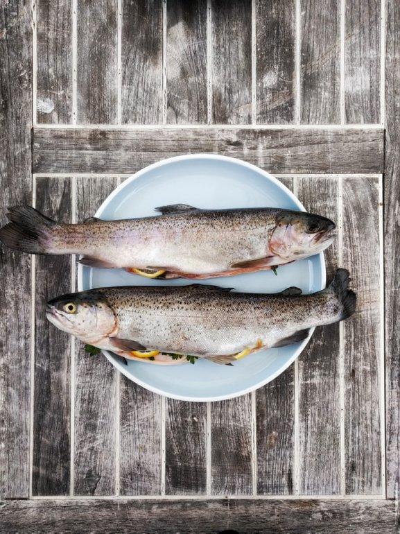 Alergia a peixes