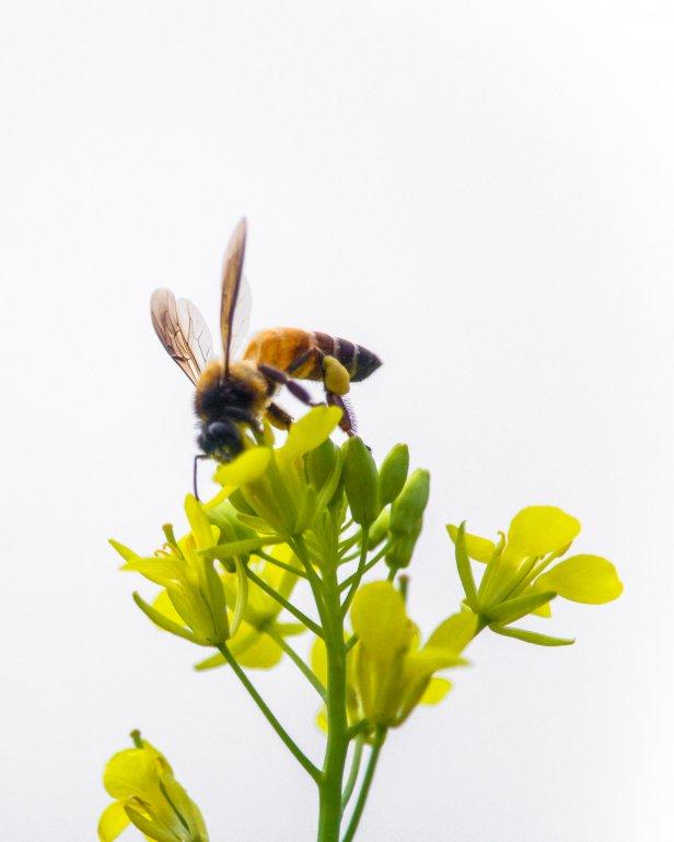 O que fazer se for picado por abelha ou vespa?