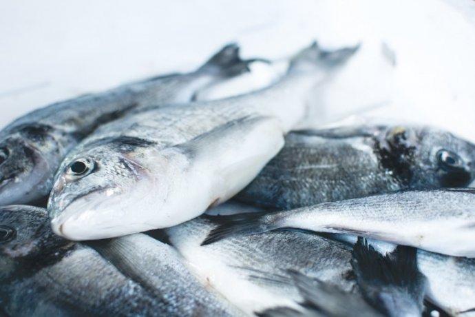 A introdução de peixe antes de 1 ano de idade diminui o risco de asma e eczema